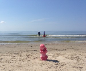 OFancyFrench-Pink-Poodle-on-Beach